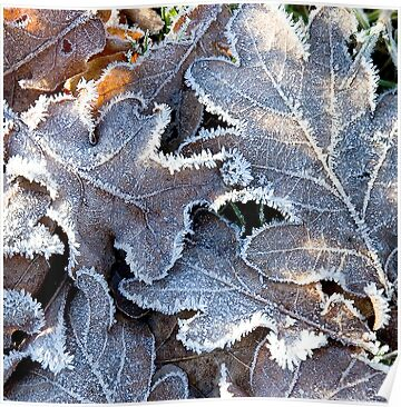 Frosty Leaves by BlueShift