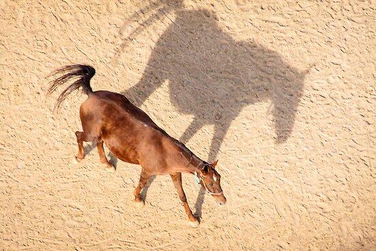 A Cappadocian Horse and its Shadow by Robert Kelch, M.D.