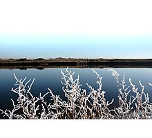 frosty branches in snow against cold blue sky and river Photographic Print