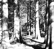 Trees in Ink by Kelly Wells