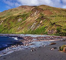 Macquarie Island Beach by Carole-Anne