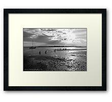 Pelicans on Low Tide Framed Print