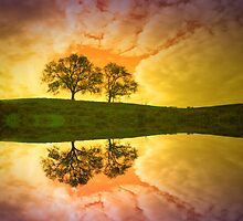 Two Trees in Colour by Tara  Turner