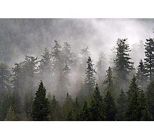 Clouds swirl around the treetops in Belcarra Regional Park Photographic Print