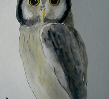 Owl by ValM