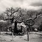 Haunted Tree by Mark Ingram Photography