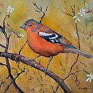 Chaffinch with blossums by Jennifer Eurell