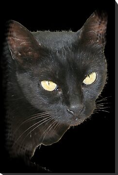 Black Cat on Black Background by taiche