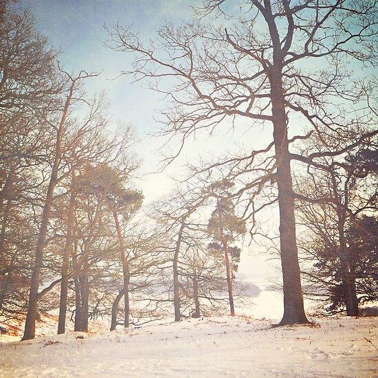 Winter trees by Lyn  Randle
