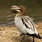 Two Headed Duck - Wrestling With The Self! by reflector