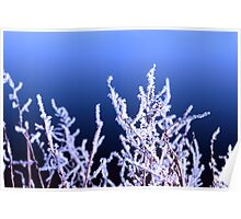 icy twigs and branches in cold snow against blue Poster