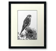 MERLIN (Bird of Prey) Framed Print