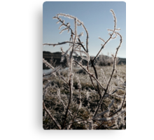 icy twigs and grass in snow against blue river and sky Canvas Print