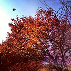 Autumn Tree and Bird by SylviaS