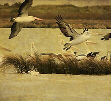 Pelican Days by Margi