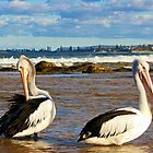 Pelicans by Doug Cliff