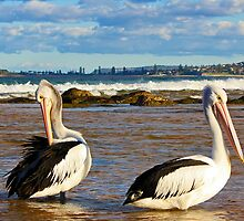 Pelicans at the entrance to Narrabeen Lake by Doug Cliff