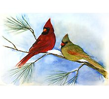 cardinals on a pine branch wintry handmade aquarelle Photographic Print