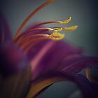 Hemerocallis Macro by hinomaru