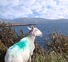 sheeps view of atlantic and mountains of ireland by morrbyte