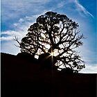 Lone Tree by RichardBlanton