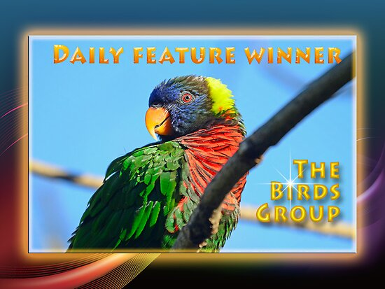 Daily Features Banner _ The Birds Group by imagetj