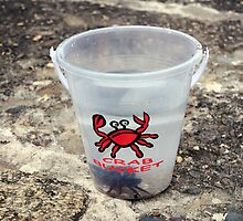 Crab bucket with resident crab, Looe, Cornwall, UK by silverportpics