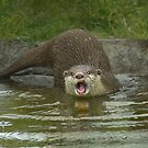 """""""Gubby Otter"""" by peaky40"""