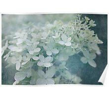 Veiled Beauty Poster