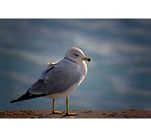 Gull Photographic Print