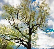 tree on the sky by plamenx