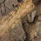 Tree Mating Caught in the Act by Thomas Murphy