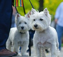 Westies of Central Park by Dana Horne