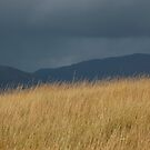 Purple Moor Grass in Autumn by cuilcreations