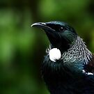 Tui - Up close and personal...............! by Roy  Massicks