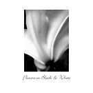 Flowers in Black & White by LouiseK