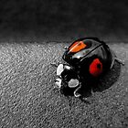 Black Ladybird with Red Spots by PurestPictures