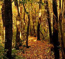 Gilded Path by SolasandScath