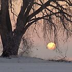 Sunrise Tree by Gregory J Summers