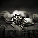 A Snail's World by Trish Mistric