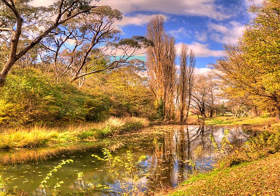 Autumn Leaves - Rockley NSW - The HDR Experience by Philip Johnson