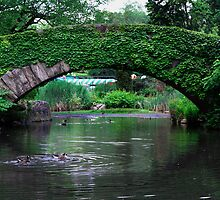 Central Park | New York 2012 by RedDash