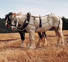 Shire Horse Pair by Simon Harris