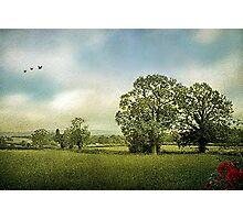Summer Fields Photographic Print