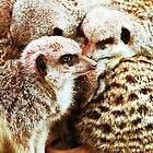 Meerkats by bionkittyrocks