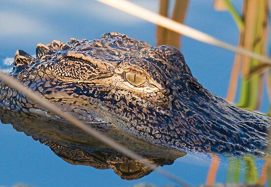 Alligator Eye and Reflection by imagetj