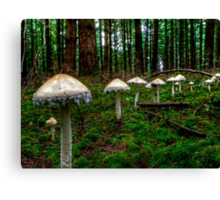 March Of The Fairy Ring Canvas Print