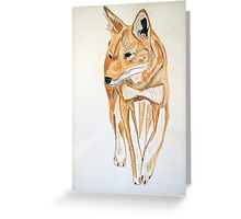 Ethiopian Wolf Greeting Card