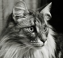 Maine Coon Mono iPad Case by Carol Bleasdale