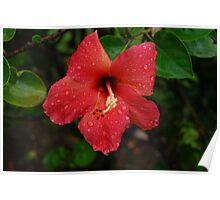 Radiant Red Flower Poster